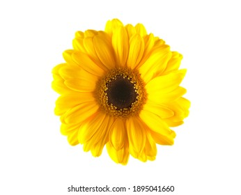 Isolated flower over with background