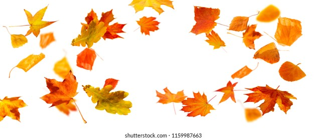isolated flying fall leaves
