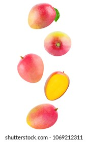 Isolated flying fruits. Falling Whole mango isolated on white background with clipping path as package design element and advertising.