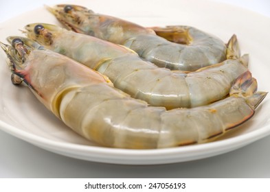 Isolated fresh and big shrimps or prawns on plate with white background