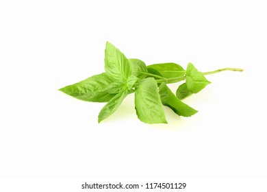 isolated fresh green basil herb leaves  on white background