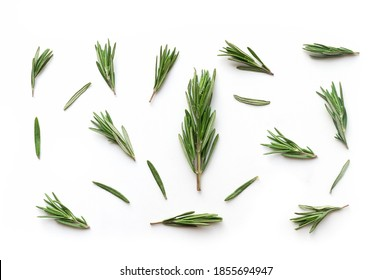 Isolated fresh rosemary twigs. Food backdrop. Top view.