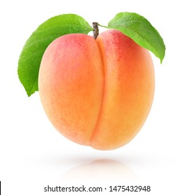 Isolated fruit. One fresh apricot on a branch isolated on white background with clipping path