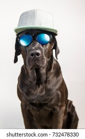 Isolated funny and cute young black labrador wearing sunglasses and grey cap, looking at camera on white background
