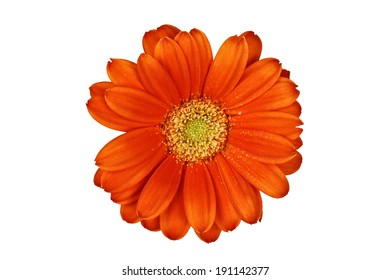 Isolated gerber daisy macro over white with clipping path included.