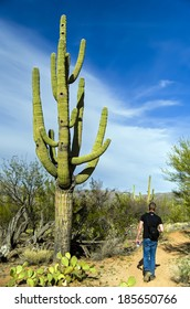 Isolated giant saguaro cactus tree and a hiker at Saguaro National Park, Arizona Vintage America / USA / Cactus / Wild West / New Mexico / Las Vegas / Cactus Desert / Giant Tree Background