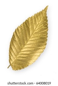 Isolated gold elm leaf
