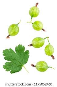 Isolated gooseberry. Collection of different gooseberries and green leaf gooseberry isolated on white background with clipping path