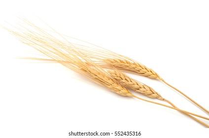 An isolated grain wheat