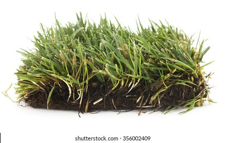 Isolated grass patch on a white background.