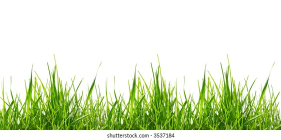 Isolated green grass on white background. Full-size composite photo.