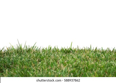 ISOLATED GREEN GRASS ON WHITE BACKGROUND (The Image Has Shallow Depth Of Field)