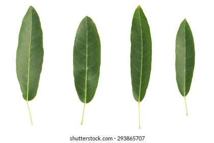 isolated green leaf on the white background