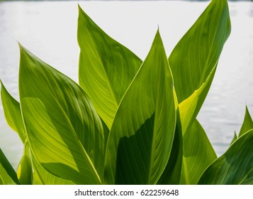 isolated green leaf on white background