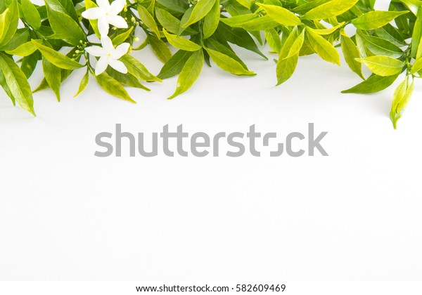 Isolated Green leaves on white background