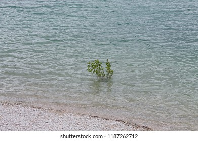 Isolated green plant growing in the lake water (Marche, Italy, Europe)