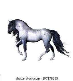 Isolated grey horse illustration