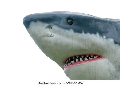 the isolated of head's shark