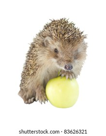 Isolated Hedgehog In Green Apple