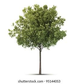 Isolated hi definition tree