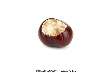 Isolated Horsechestnut Aesculus Hippocastanum Seed. Also Horse-Chestnut or Conker Tree.