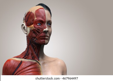 isolated Human anatomy of a female - muscle anatomy of the face neck and chest , medical image reference of human anatomy in 3D realistic render isolated