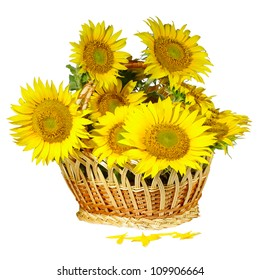Isolated image of  basket with  sunflowers on a white background closeup