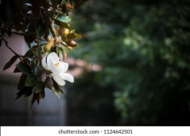 Isolated image of a flower in the garden.