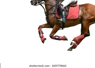 Isolated image of Horse polo Running in polo Match.