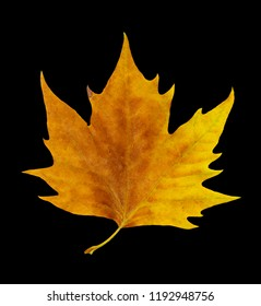 isolated image of leaf on black background