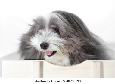 An isolated image of a long haired dog riding in a wagon with the breeze blowing in his face.
