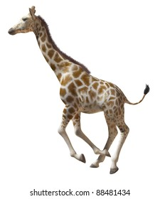 Isolated image of a running giraffe on white background