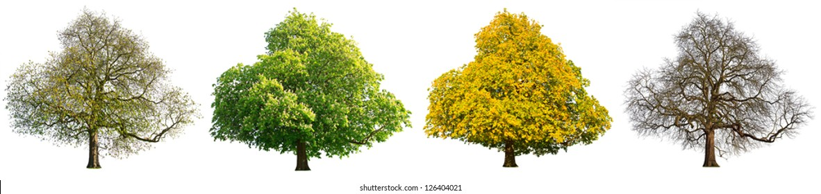 Isolated image of the same tree showing seasonal changes /  Four seasons isolated tree