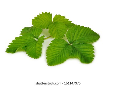 Isolated image of a strawberry leaf on a white background