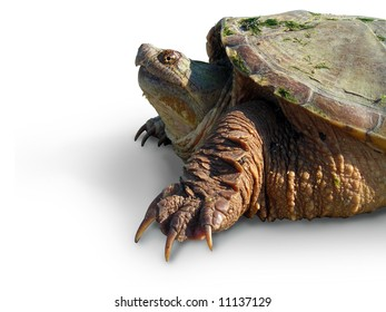 An isolated image of turtle.