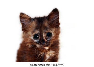 Isolated Kitten