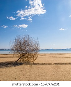 Isolated large tumbleweed plant (brown, round, dead bush) blown onto a deserted yellow sandy beach creating a deep shadow.  Calm ocean, bright blue sky with puffy clouds.