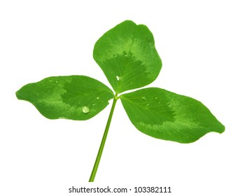 isolated leaf of clover