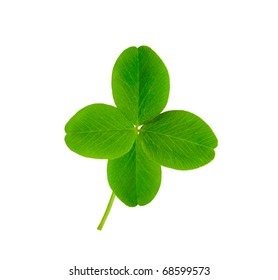 isolated leaf of clover with four petals