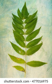 isolated leaf on green watercolor background - design of nature