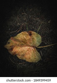 An isolated leaf on soil