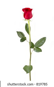 Isolated long stem red rose bud. Focus = front of rosebud. 12MP camera.