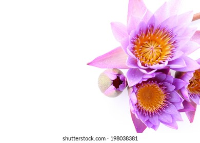The isolated lotus flower on white background