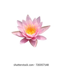 isolated lotus water lily pink flower top view. Graphic resource on white background