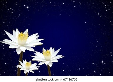 Isolated lotus white night sky background
