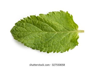 Isolated macro of fresh mint leaf.