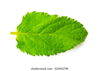 Isolated macro of fresh mint leaf