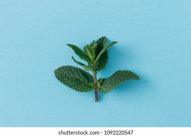 Isolated mint leaves shot from above on a pastel blue background.