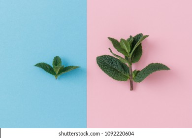 Isolated mint leaves shot from above on a pastel blue and pink background. One sprig smaller than the other.