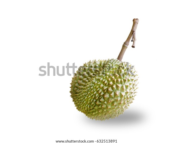 Isolated Mon Thong or Golden Pillow durain , king of tropical fruit with clipping path